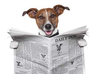 Newsbites Reading Dog